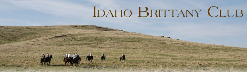 idaho brittany club